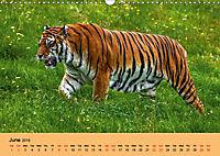 Just Bengal Tigers (Wall Calendar 2019 DIN A3 Landscape) - Produktdetailbild 6