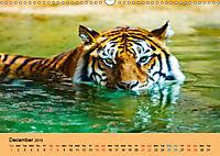 Just Bengal Tigers (Wall Calendar 2019 DIN A3 Landscape) - Produktdetailbild 12