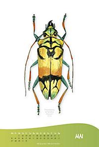 Käferkalender 2019 - Produktdetailbild 1