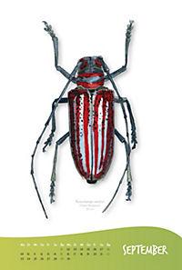 Käferkalender 2019 - Produktdetailbild 2
