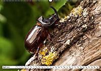 Käferwelt - Kampf der Titanen (Wandkalender 2019 DIN A2 quer) - Produktdetailbild 4
