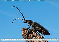 Käferwelt - Kampf der Titanen (Wandkalender 2019 DIN A2 quer) - Produktdetailbild 2