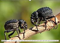 Käferwelt - Kampf der Titanen (Wandkalender 2019 DIN A2 quer) - Produktdetailbild 1