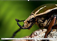 Käferwelt - Kampf der Titanen (Wandkalender 2019 DIN A2 quer) - Produktdetailbild 6