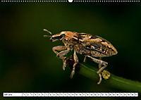 Käferwelt - Kampf der Titanen (Wandkalender 2019 DIN A2 quer) - Produktdetailbild 7