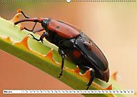 Käferwelt - Kampf der Titanen (Wandkalender 2019 DIN A2 quer) - Produktdetailbild 5