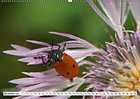 Käferwelt - Kampf der Titanen (Wandkalender 2019 DIN A2 quer) - Produktdetailbild 11