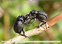 Käferwelt - Kampf der Titanen (Wandkalender 2019 DIN A2 quer) - Produktdetailbild 8