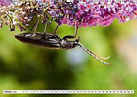 Käferwelt - Kampf der Titanen (Wandkalender 2019 DIN A2 quer) - Produktdetailbild 10