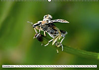 Käferwelt - Kampf der Titanen (Wandkalender 2019 DIN A2 quer) - Produktdetailbild 12