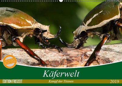 Käferwelt - Kampf der Titanen (Wandkalender 2019 DIN A2 quer), Axel Hilger