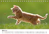 Kätzchen 2019 (Tischkalender 2019 DIN A5 quer) - Produktdetailbild 3
