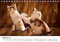Kätzchen 2019 (Tischkalender 2019 DIN A5 quer) - Produktdetailbild 2