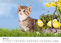 Kätzchen 2019 (Tischkalender 2019 DIN A5 quer) - Produktdetailbild 4