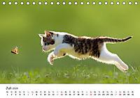 Kätzchen 2019 (Tischkalender 2019 DIN A5 quer) - Produktdetailbild 7