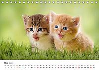 Kätzchen 2019 (Tischkalender 2019 DIN A5 quer) - Produktdetailbild 5