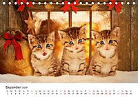 Kätzchen 2019 (Tischkalender 2019 DIN A5 quer) - Produktdetailbild 12