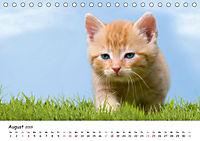 Kätzchen 2019 (Tischkalender 2019 DIN A5 quer) - Produktdetailbild 8