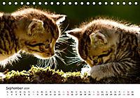Kätzchen 2019 (Tischkalender 2019 DIN A5 quer) - Produktdetailbild 9