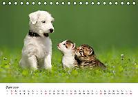 Kätzchen 2019 (Tischkalender 2019 DIN A5 quer) - Produktdetailbild 6