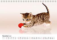 Kätzchen 2019 (Tischkalender 2019 DIN A5 quer) - Produktdetailbild 11