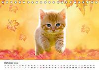 Kätzchen 2019 (Tischkalender 2019 DIN A5 quer) - Produktdetailbild 10