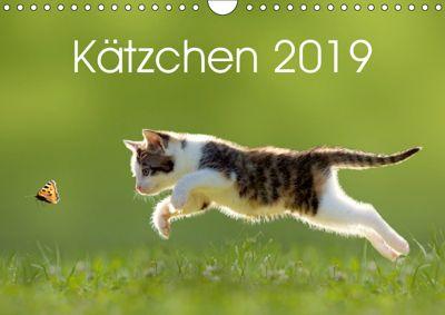 Kätzchen 2019 (Wandkalender 2019 DIN A4 quer), LEOBA