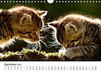 Kätzchen 2019 (Wandkalender 2019 DIN A4 quer) - Produktdetailbild 9