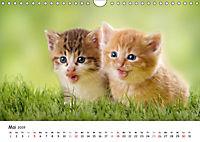 Kätzchen 2019 (Wandkalender 2019 DIN A4 quer) - Produktdetailbild 5