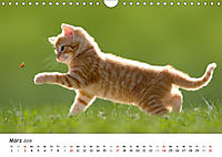 Kätzchen 2019 (Wandkalender 2019 DIN A4 quer) - Produktdetailbild 3