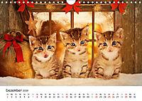 Kätzchen 2019 (Wandkalender 2019 DIN A4 quer) - Produktdetailbild 12