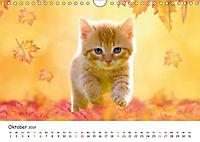Kätzchen 2019 (Wandkalender 2019 DIN A4 quer) - Produktdetailbild 10