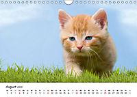 Kätzchen 2019 (Wandkalender 2019 DIN A4 quer) - Produktdetailbild 8