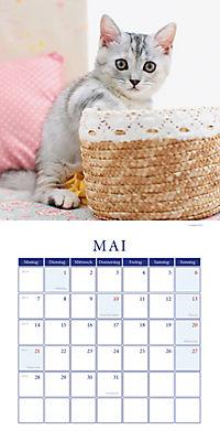 Kätzchen Broschurkal. 2018 - Produktdetailbild 5