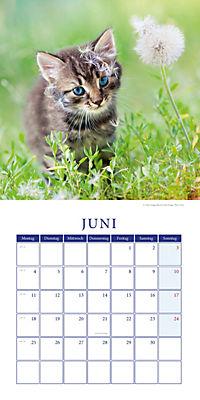 Kätzchen Broschurkal. 2018 - Produktdetailbild 6