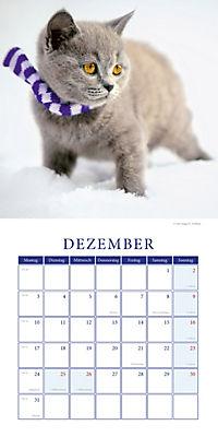 Kätzchen Broschurkal. 2018 - Produktdetailbild 12