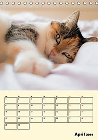 Kätzchen - Theater (Tischkalender 2019 DIN A5 hoch) - Produktdetailbild 4