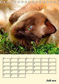 Kätzchen - Theater (Tischkalender 2019 DIN A5 hoch) - Produktdetailbild 7