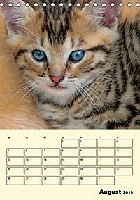Kätzchen - Theater (Tischkalender 2019 DIN A5 hoch) - Produktdetailbild 8