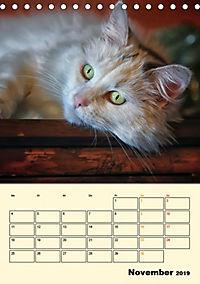 Kätzchen - Theater (Tischkalender 2019 DIN A5 hoch) - Produktdetailbild 11