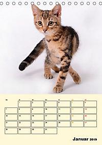 Kätzchen - Theater (Tischkalender 2019 DIN A5 hoch) - Produktdetailbild 1