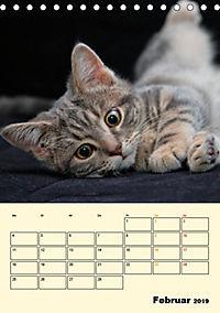 Kätzchen - Theater (Tischkalender 2019 DIN A5 hoch) - Produktdetailbild 2