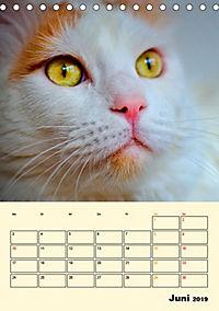Kätzchen - Theater (Tischkalender 2019 DIN A5 hoch) - Produktdetailbild 6