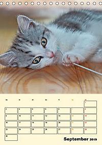 Kätzchen - Theater (Tischkalender 2019 DIN A5 hoch) - Produktdetailbild 9