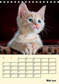 Kätzchen - Theater (Tischkalender 2019 DIN A5 hoch) - Produktdetailbild 5
