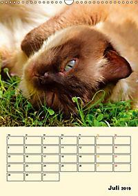 Kätzchen - Theater (Wandkalender 2019 DIN A3 hoch) - Produktdetailbild 7