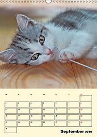 Kätzchen - Theater (Wandkalender 2019 DIN A3 hoch) - Produktdetailbild 9