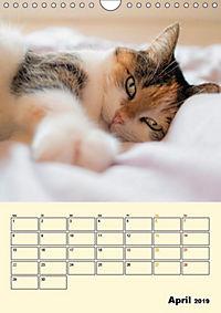 Kätzchen - Theater (Wandkalender 2019 DIN A4 hoch) - Produktdetailbild 4