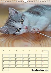 Kätzchen - Theater (Wandkalender 2019 DIN A4 hoch) - Produktdetailbild 9