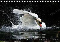 Kalender - Das Morgenbad des Höckerschwans (Tischkalender 2019 DIN A5 quer) - Produktdetailbild 2